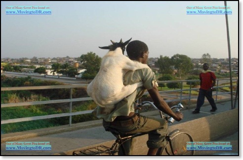 Dominican Republic picture-Dominican Republic Goat used as backpack